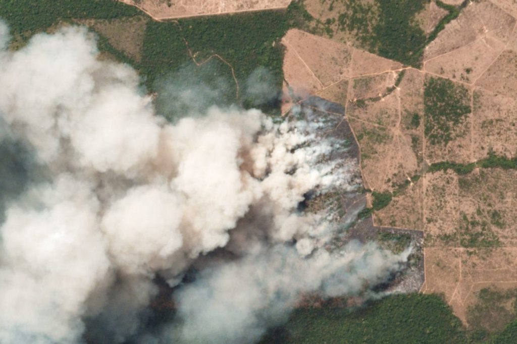 amazon rainforest burning